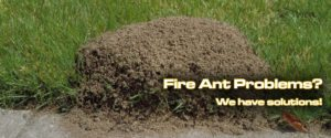 Fire Ant Control Rockwall