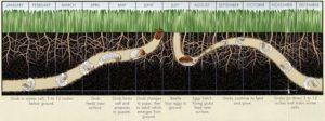 Grub Worm Diagram