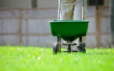 Tips for Fertilizing Lawns