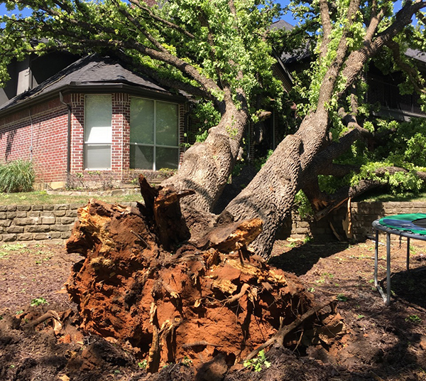 Storm Damage Tree Trimming