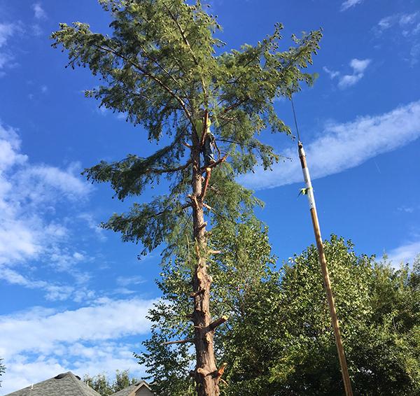Tree Trimming Rockwall
