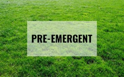 Lawn Care: How Pre-emergents work
