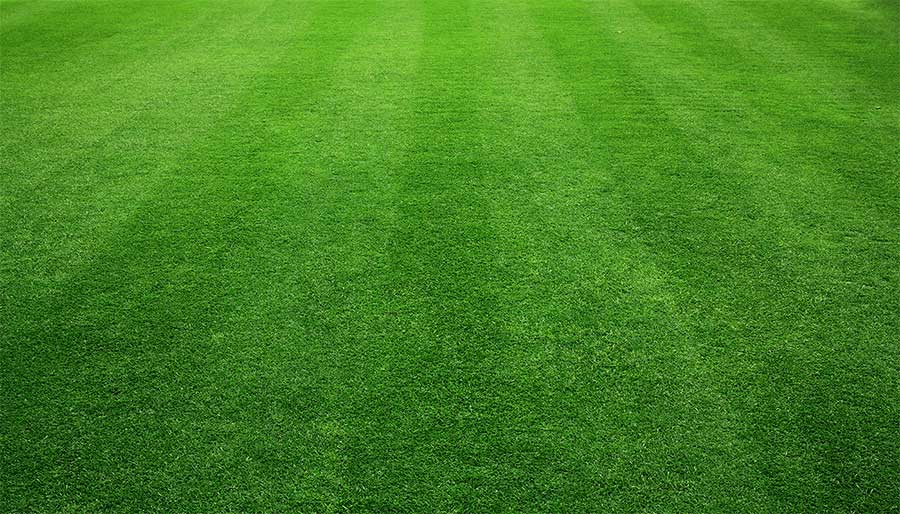 Tips to Keep Your Lawn Green