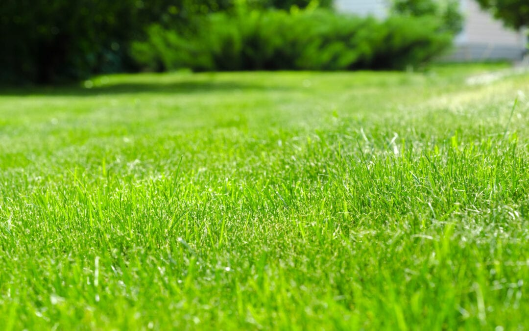 How Often Should You Fertilize Your Lawn?
