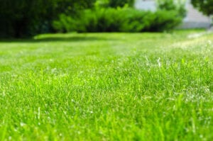 how often should you fertilize your lawn