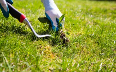 Maintaining the Green Grass of Home: 5 Steps to Weed Control
