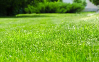 Feeding Your Lawn: When Is the Right Time to Fertilize?