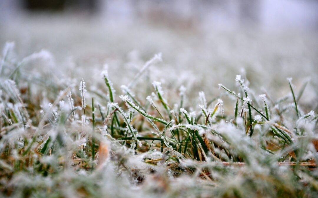 5 Winter Lawn Care Tips You Need to Know