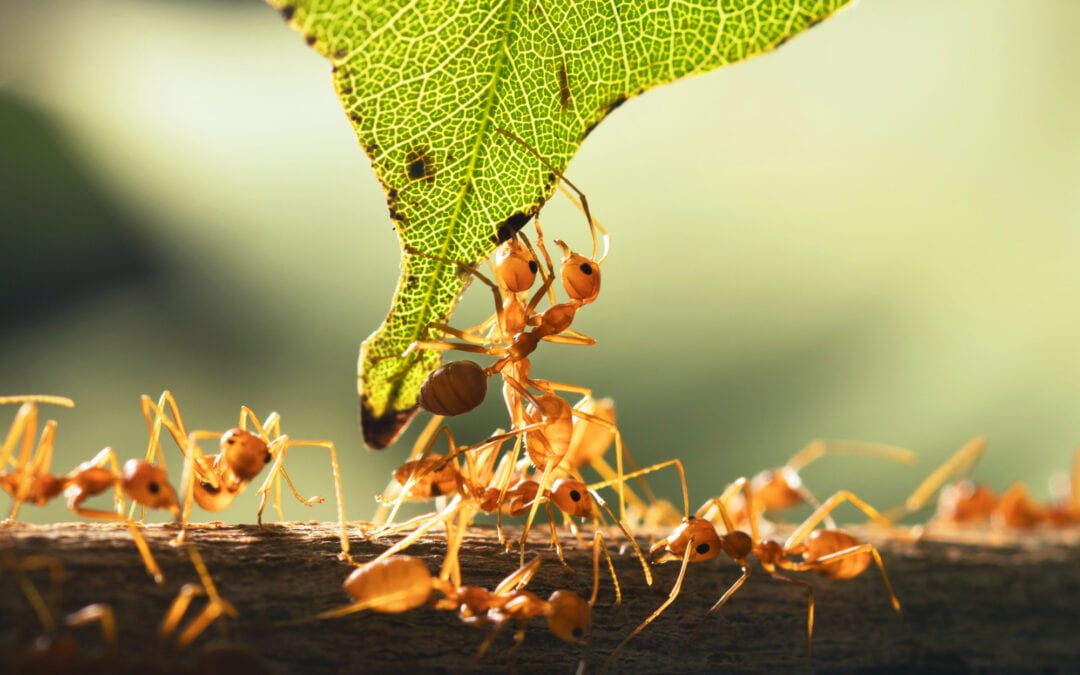 Fire Ant Control: How to Prevent Fire Ants From Taking Over Your Rockwall Lawn