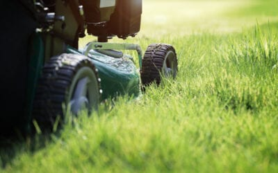 5 Texas Winter Lawn Care Mistakes to Avoid