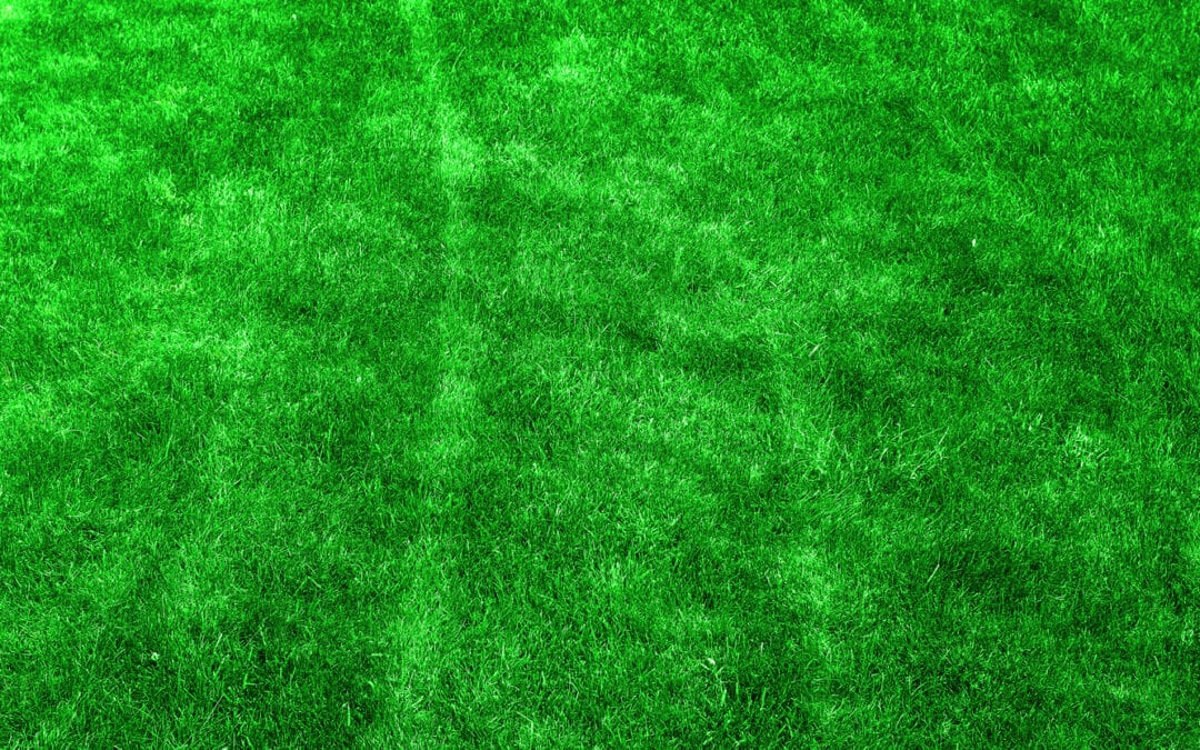 5 Important Summer Lawn Care Tips For Texas Homeowners
