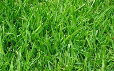 Why You Should Fertilize Your Lawn